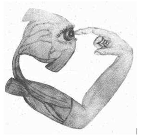 o-observador-por-francisco-varela