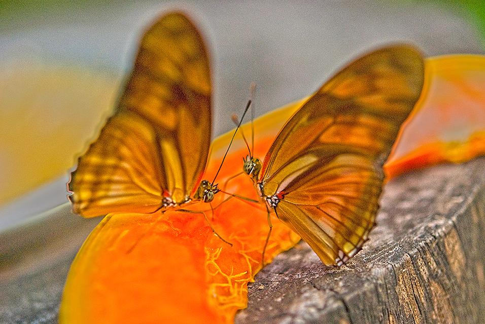 borboletas_1303