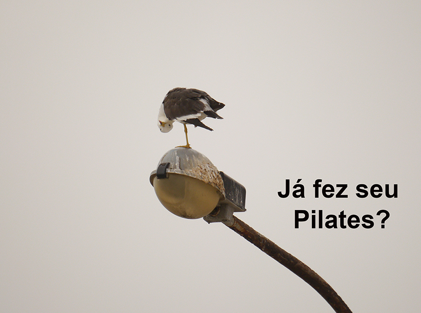 gaivota-pilates-225