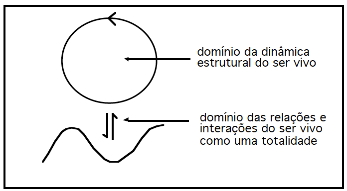 Figura 1: Dois domínios de descrição distintos dos seres vivos: o domínio estrutural e o domínio das interações.
