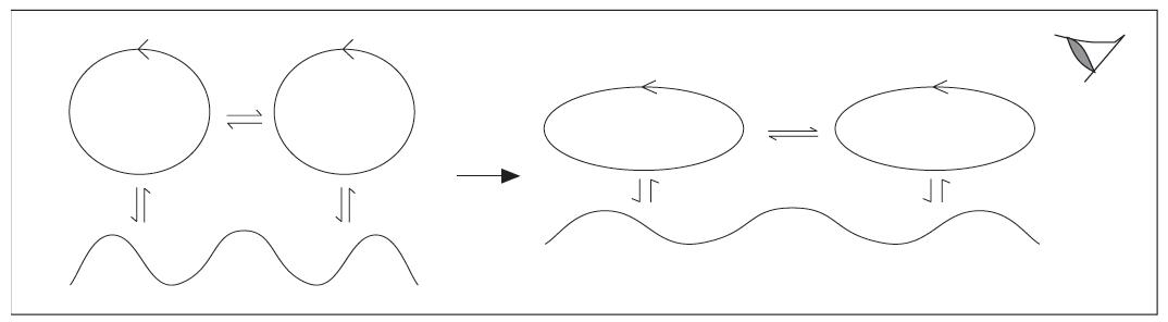 Figura 1. Dois organismos que interagem recorrentemente entre si mudam de forma congruente.